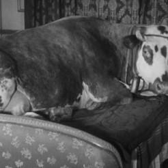 La edad de oro (Luis Buñuel, 1930)